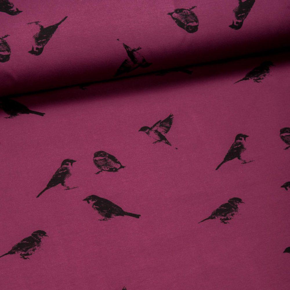 Chat Chokolat Sparrows